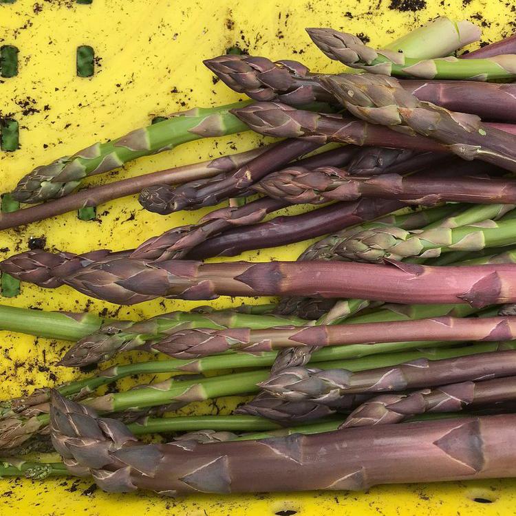 veg6-crop.jpg