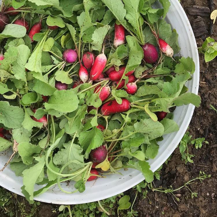 veg7-crop.jpg