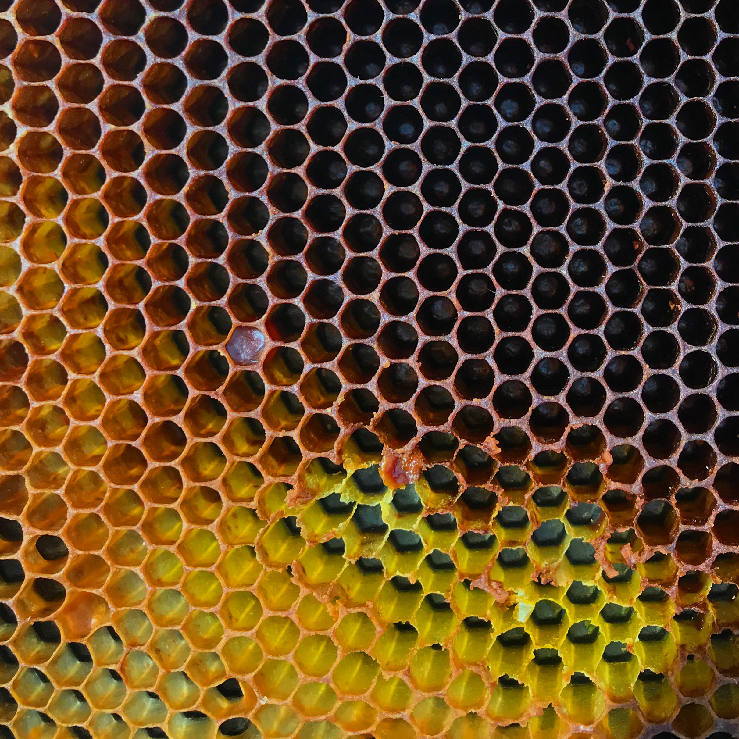 honey1-crop.jpg