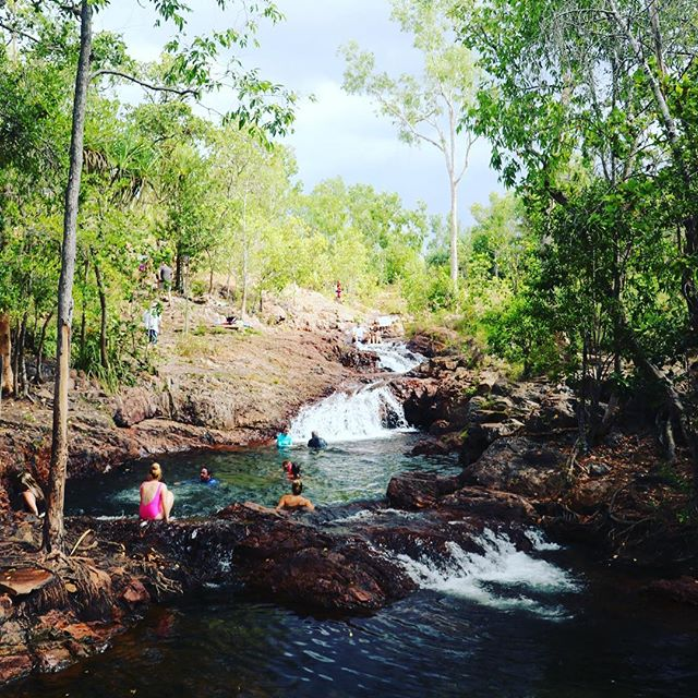 💦🦎 Crikey 🦎💦 Only $89.00 for a full day tour with lunch included! Visit three of Litchfield National Parks famous waterholes and immerse your self in The Territory! . . . #ntdaytours #litchfieldswimmingadventures #litchfieldnationalpark #florencefalls #buleyrockhole #wangifalls #backpackertour #familytour #darwinholiday #travelinspo