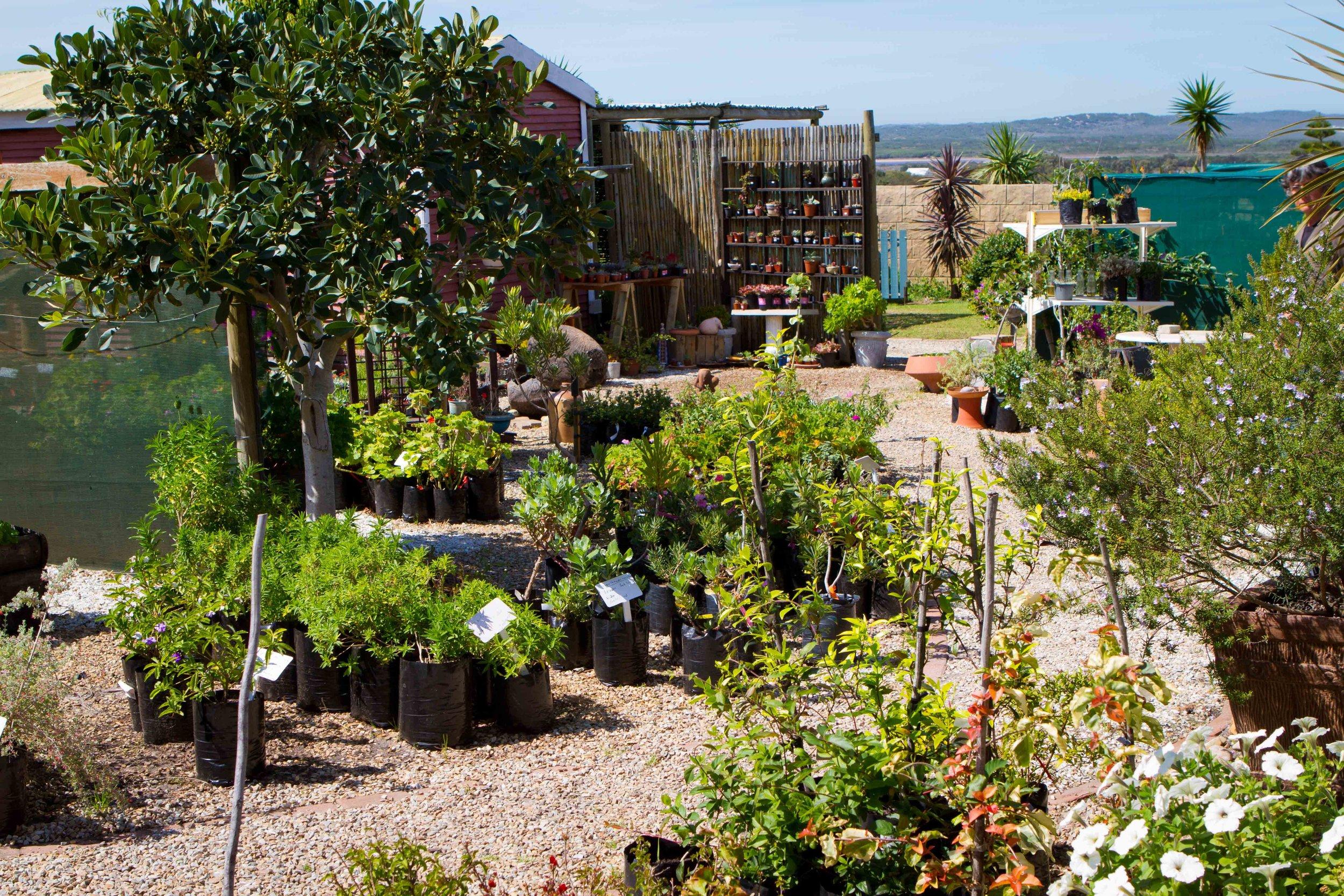 Our nursery -