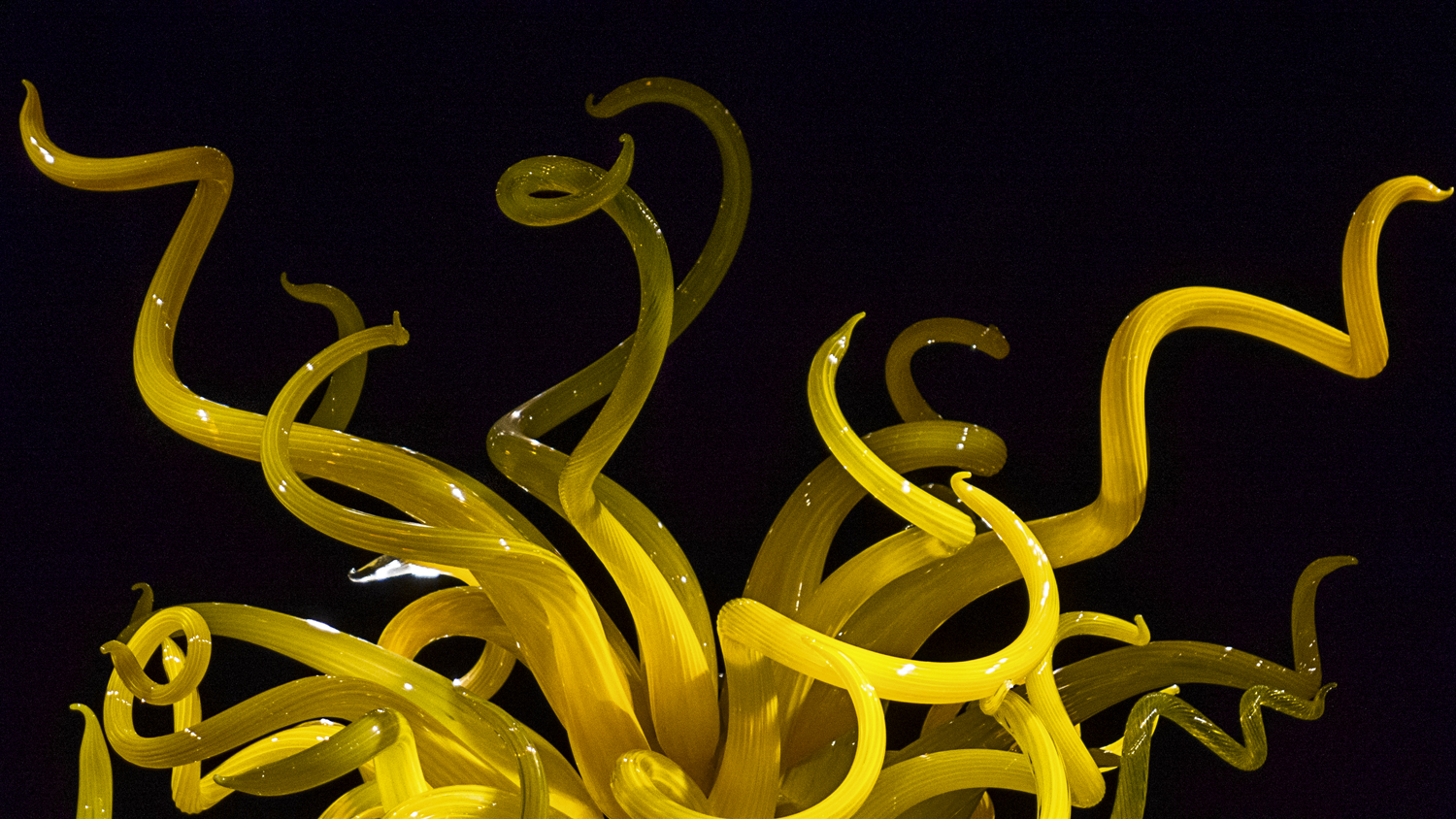VicHuber-Website-ChihulyMuseum-L1240183.jpg