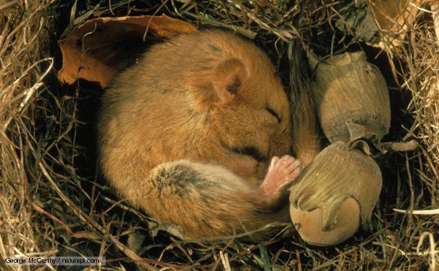 ambient hibernation.jpg