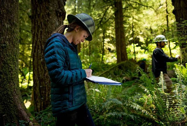 Come join our team! The Oregon Marbled Murrelet Project is hiring two new, full-time Faculty Research Assistants. For more information and to apply, go to http://jobs.oregonstate.edu/postings/68591  Thank you Jaymi Heimbuch @jaymiheimbuchwildlife for the amazing photo!  #oregonmurrelet #marbledmurrelet