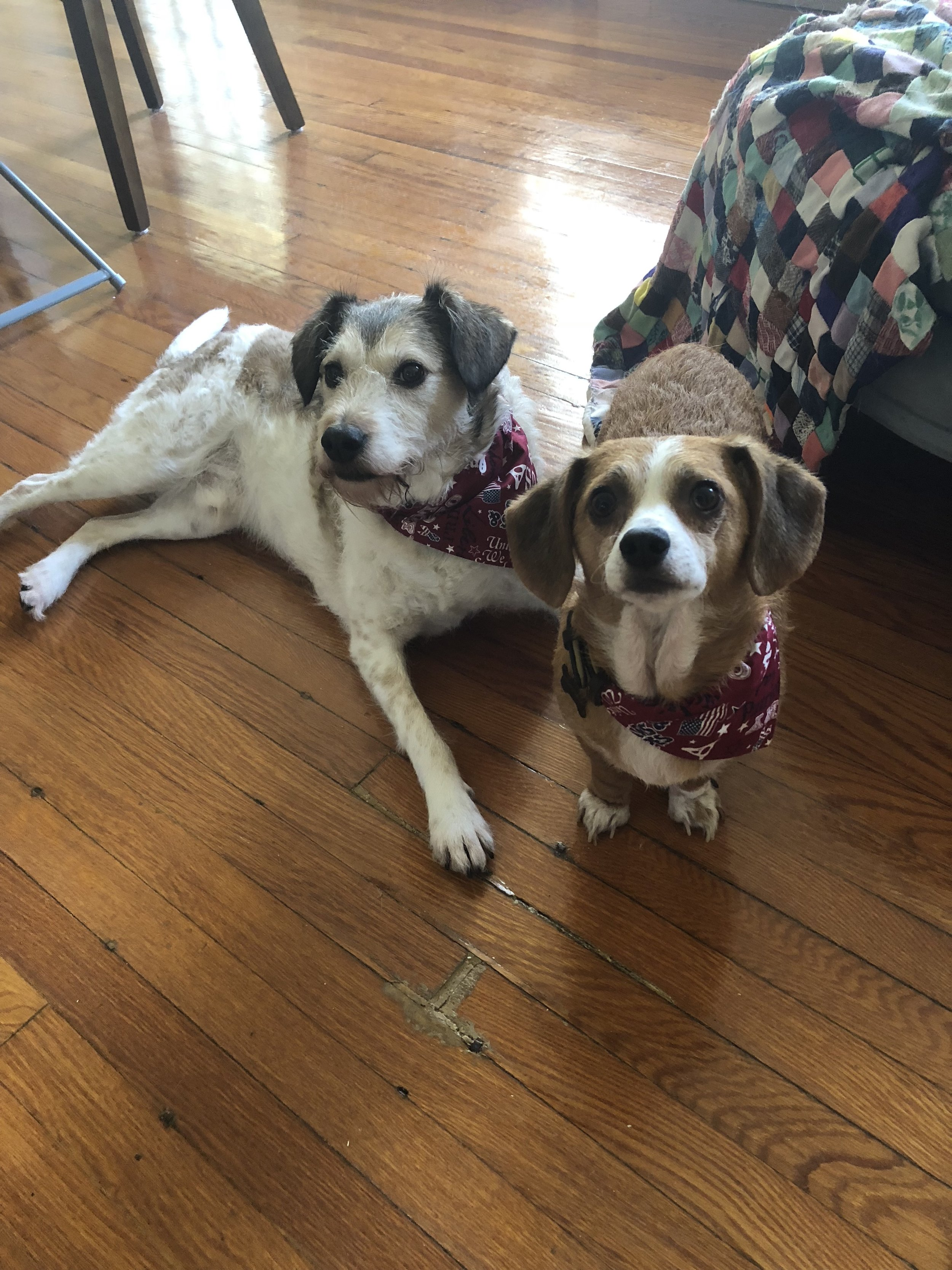 4th of July bandanas for dogs
