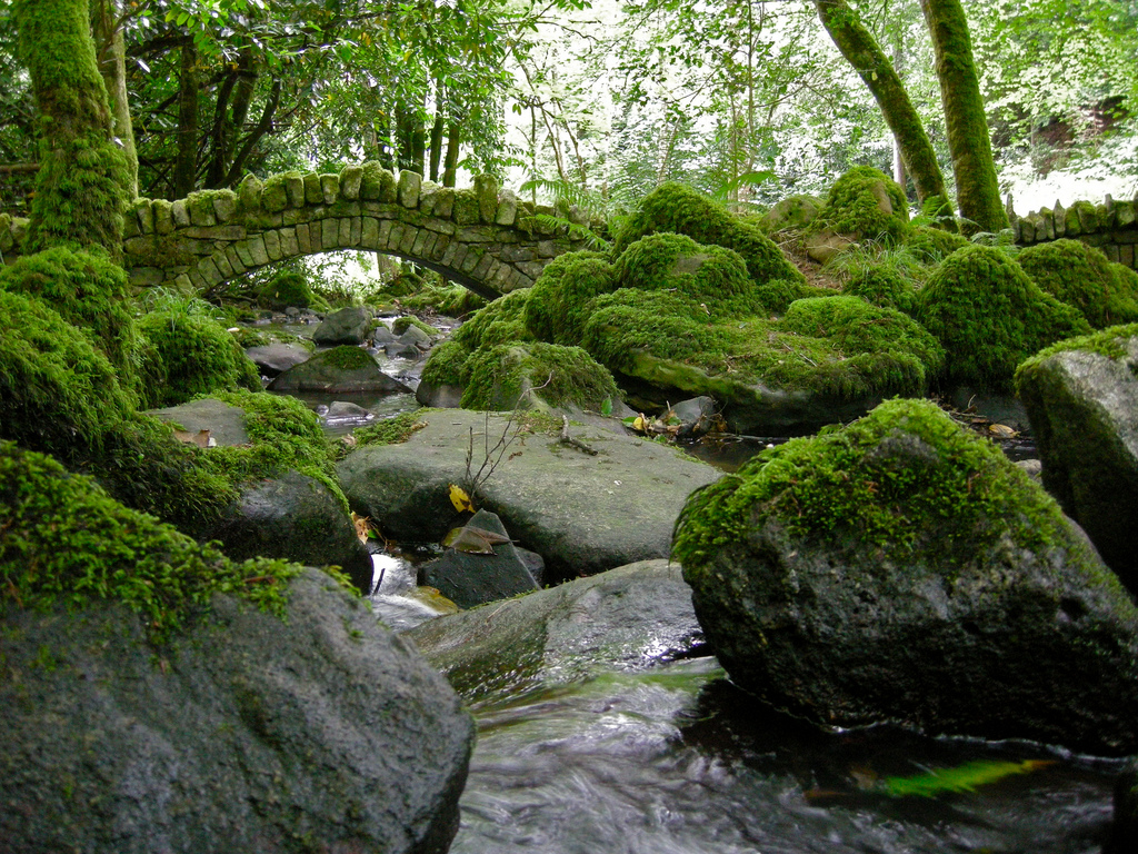ireland mossy forest bridge.jpg