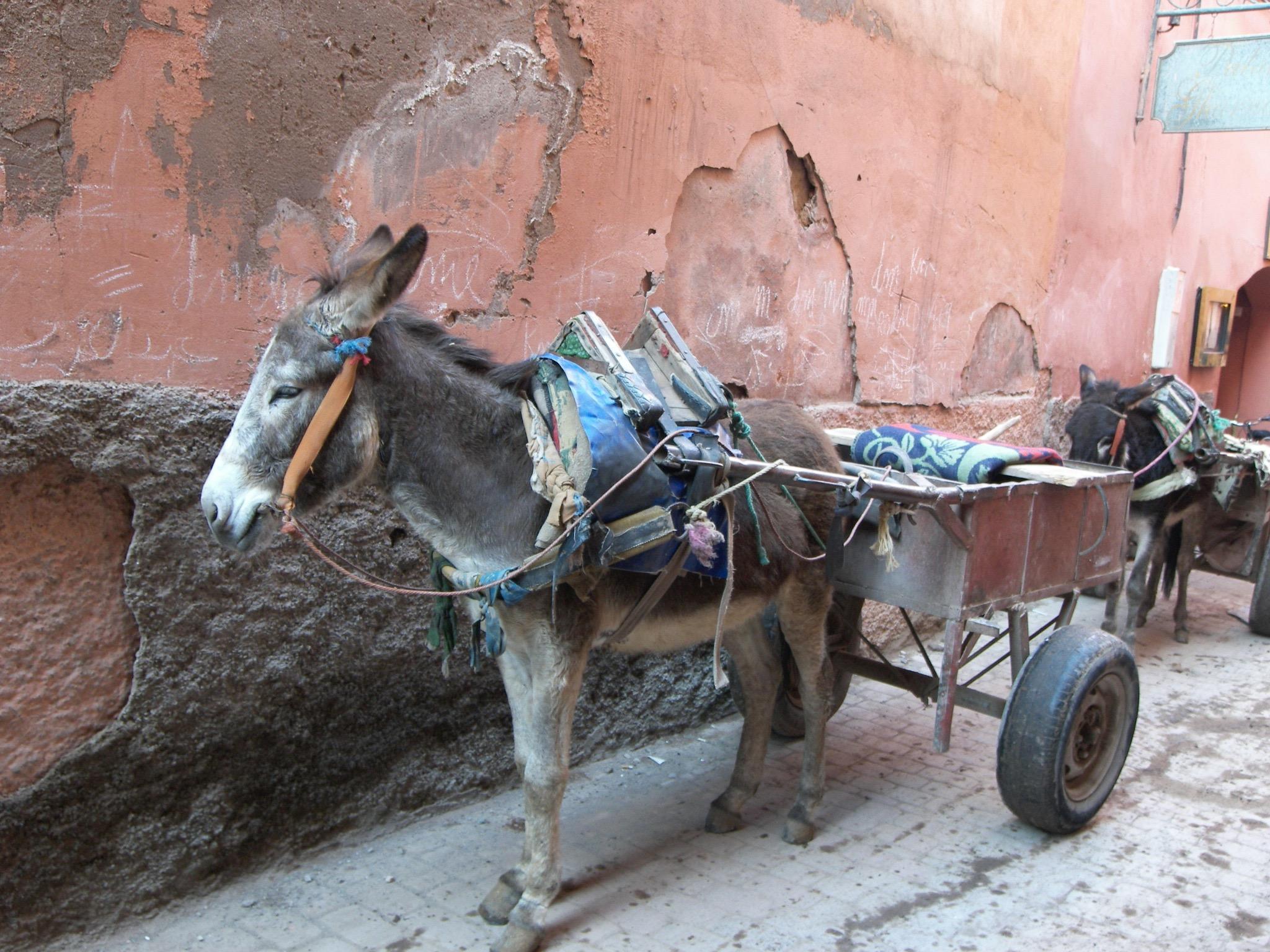 burro long.jpg