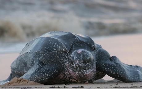 turtle on beach.jpg