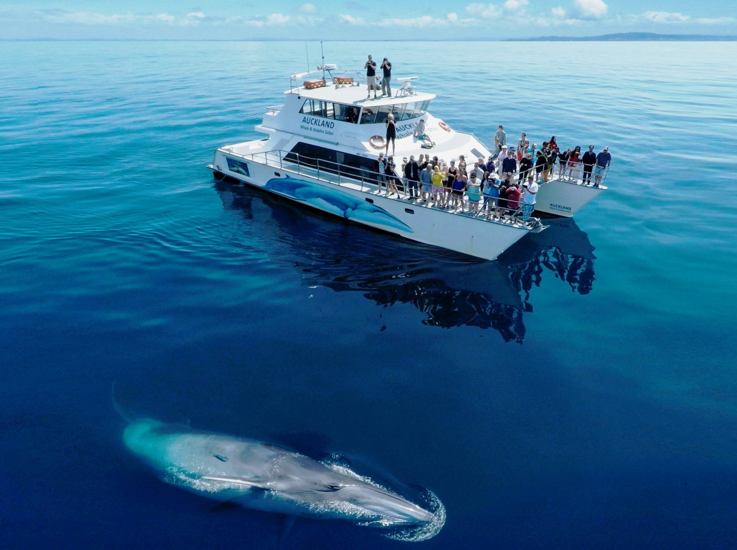 awads bryde's whale.jpg