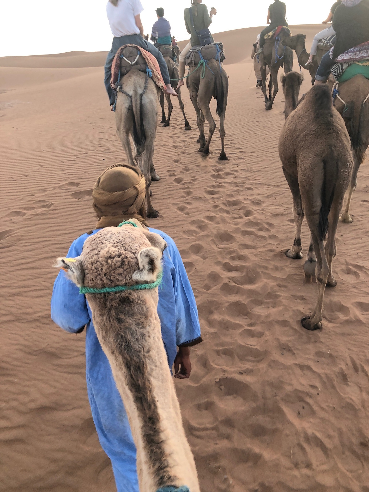 Riding camels into the sunset in  Morocco .