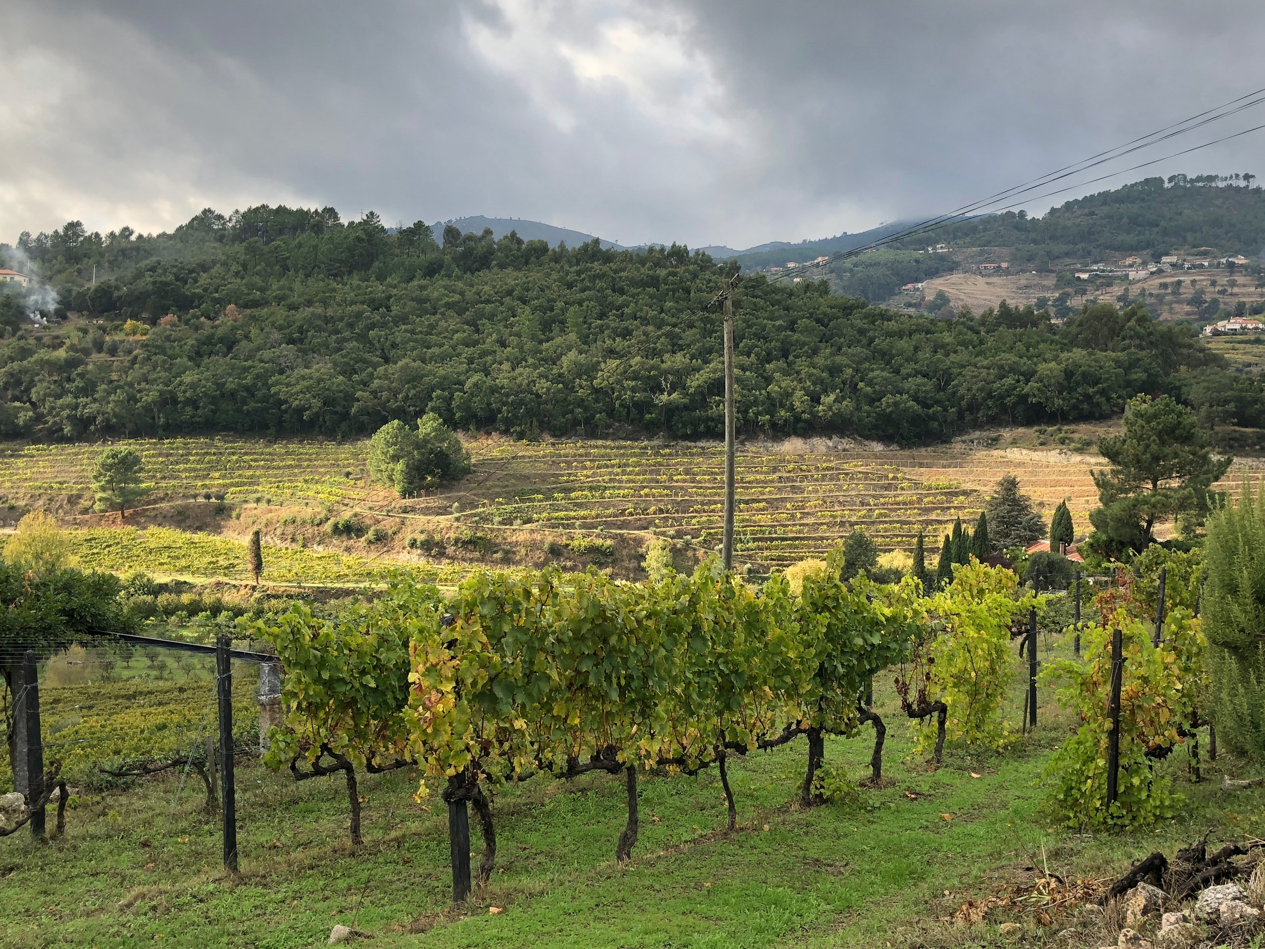Vineyards in the Douro Valley.