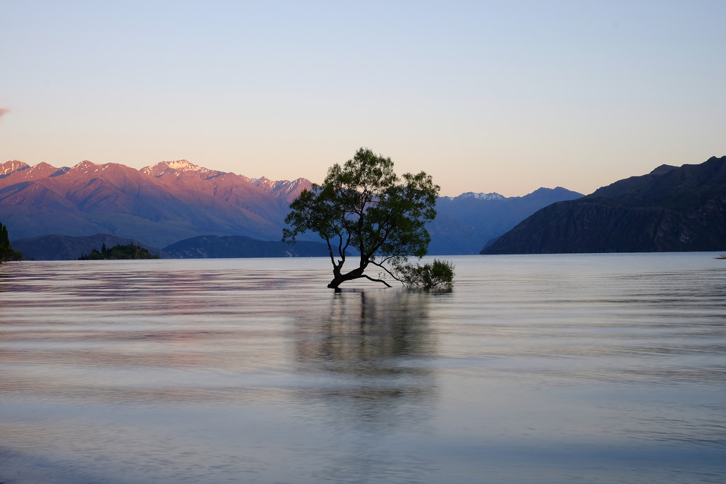 that wanaka tree.jpg