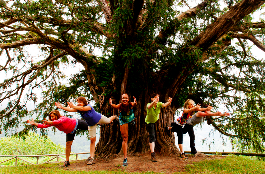 yoga pose with yew tree.png