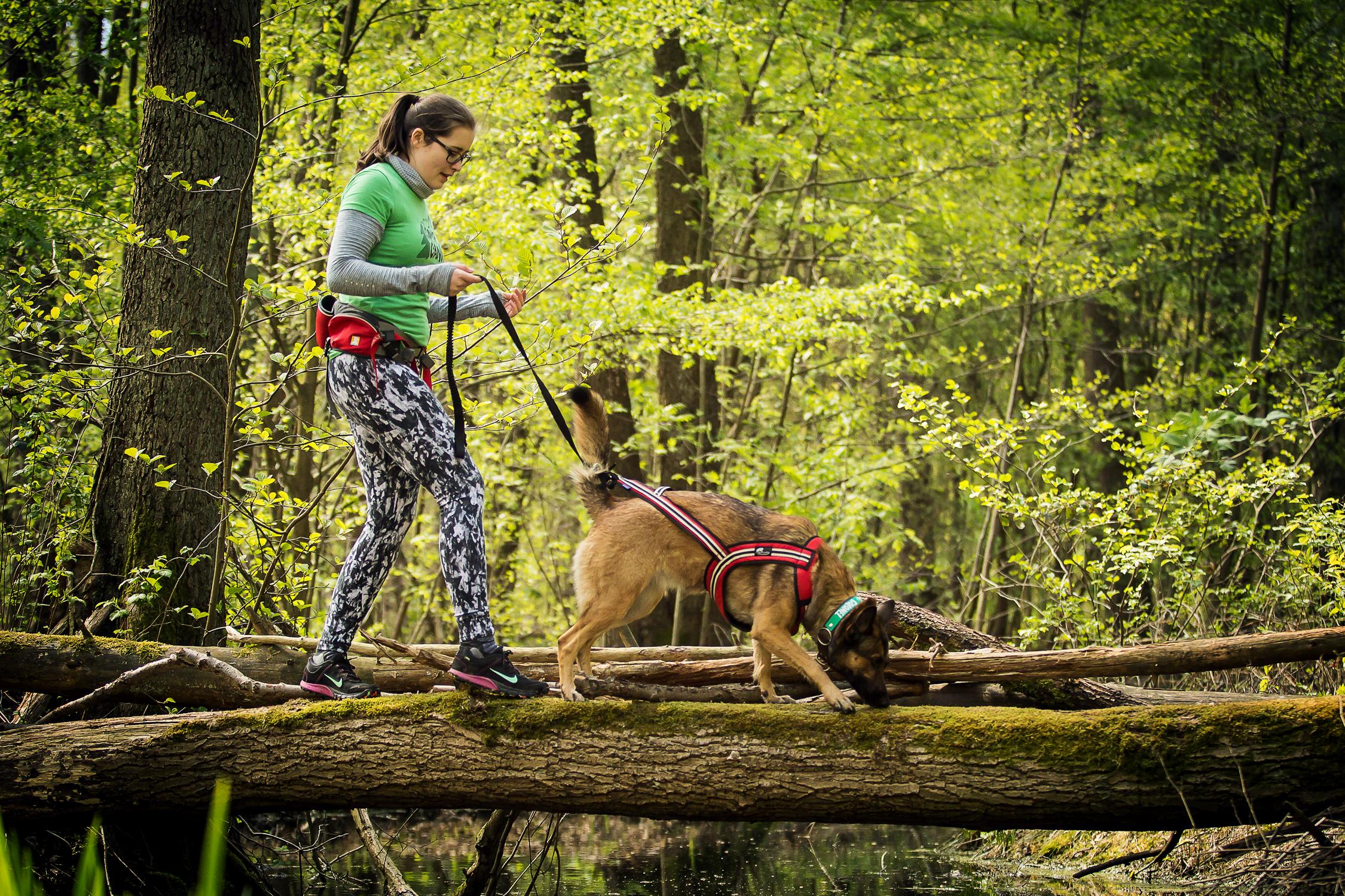 Camp Canis Challenge - Baumstamm