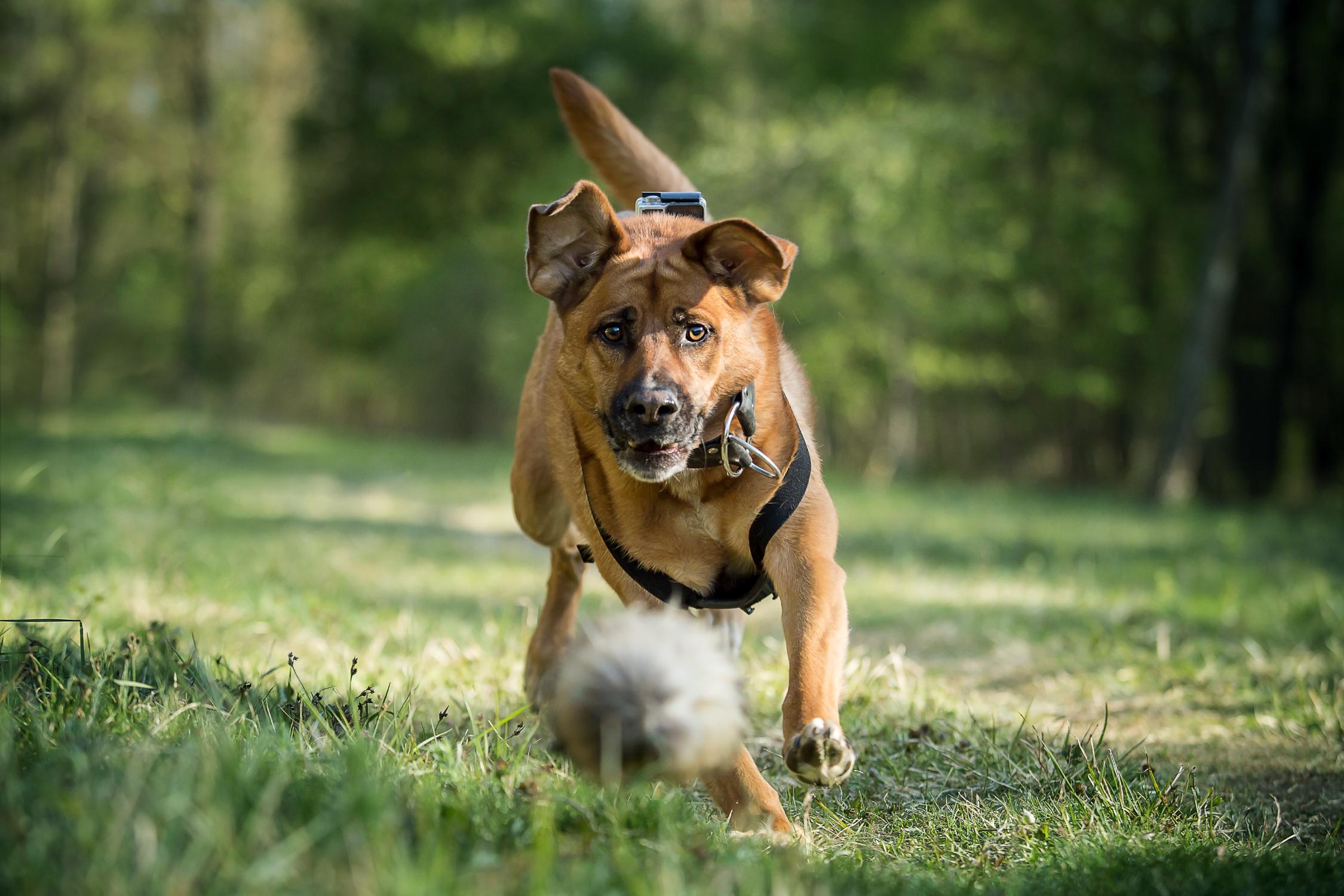 Camp Canis Challenge - Aufgaben