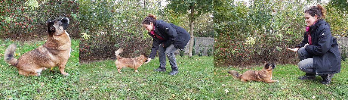 Camp Canis Kraftraum
