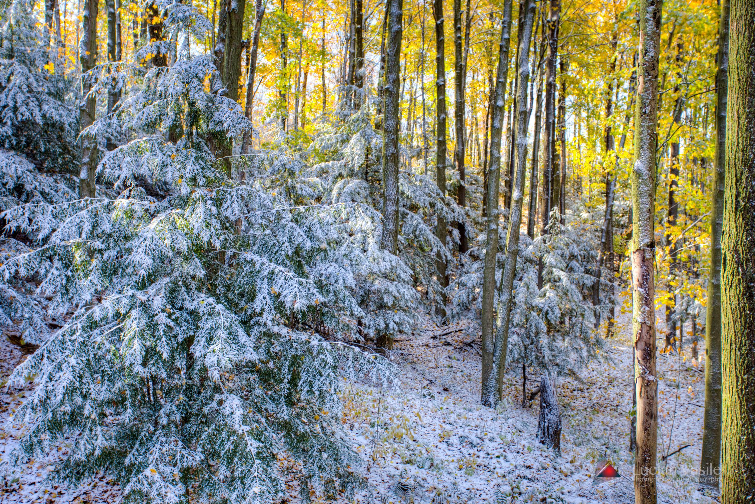 second-snow-2016 (6 of 8).jpg