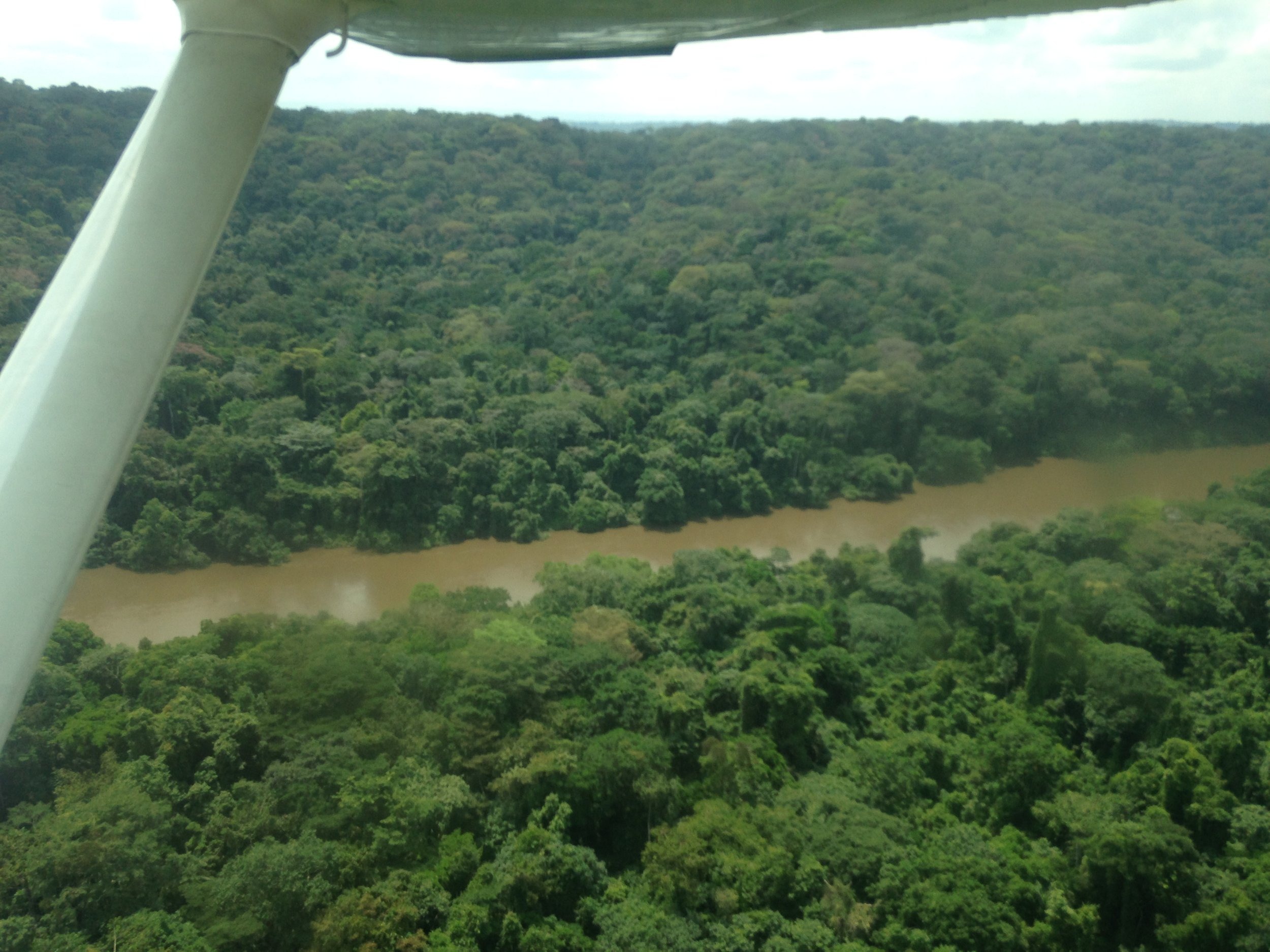 Flight over rainforest