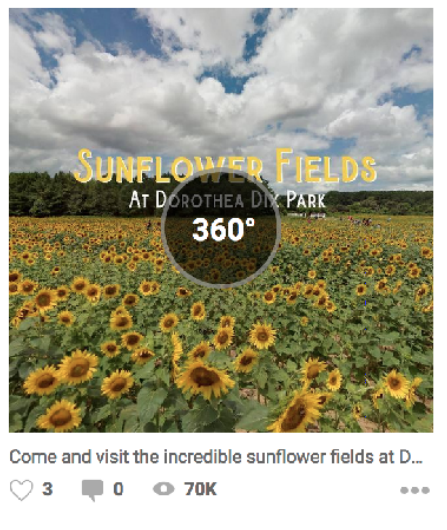 360° photo of Dorthea Dix sunflower fields in summer of 2018.