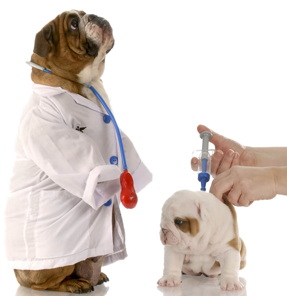 - Low cost Vaccine Clinics are held on walk-in base. No appointment necessary, no office exam fee!In addition to vaccine shots, some offer micro-chipping, heartworm tests, etc.Please ask about what additional services are available.