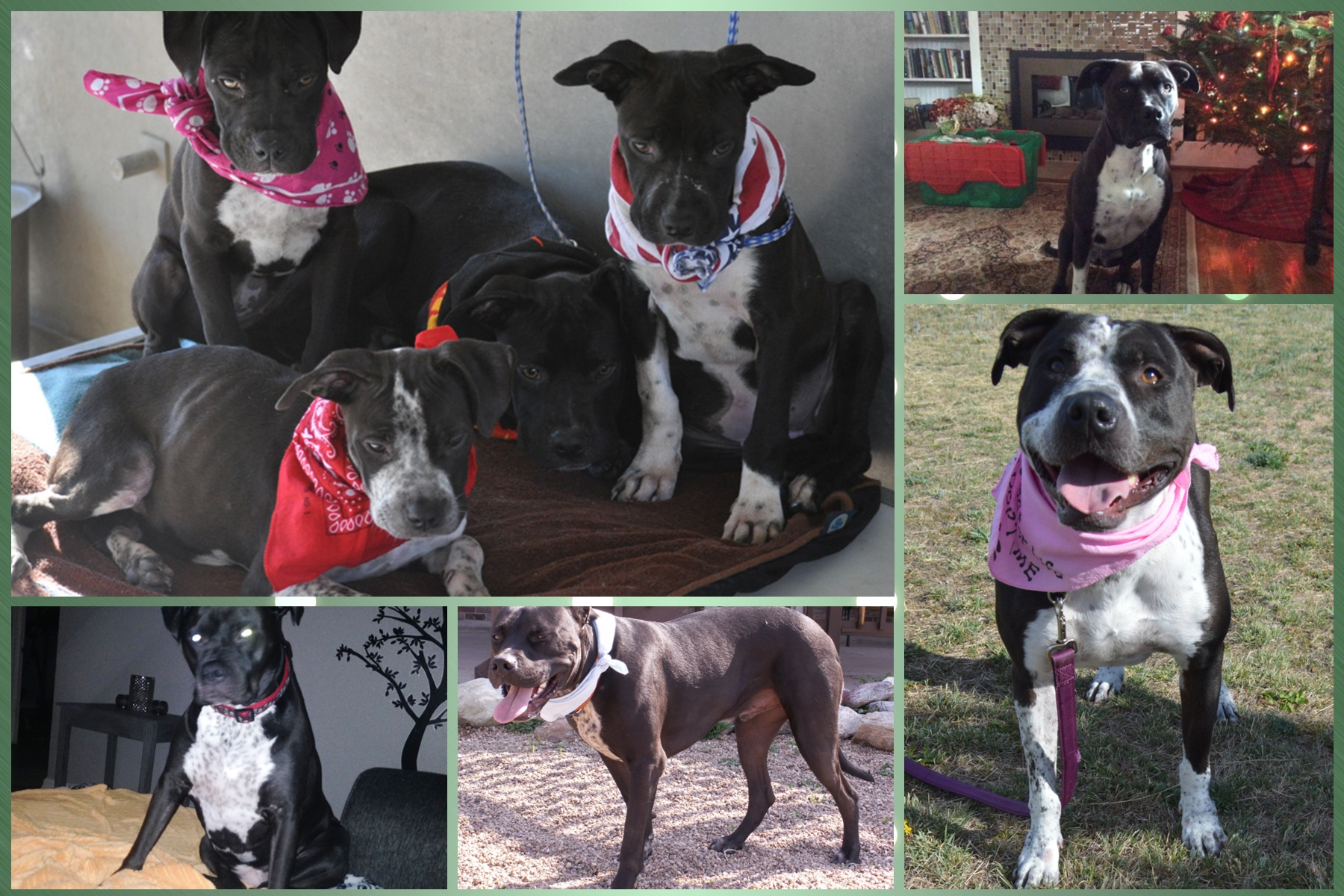 Belle, Bailey, Bindi & Sasha