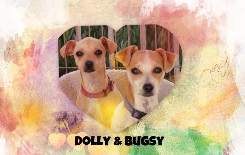 Dolly & Bugsy.jpg