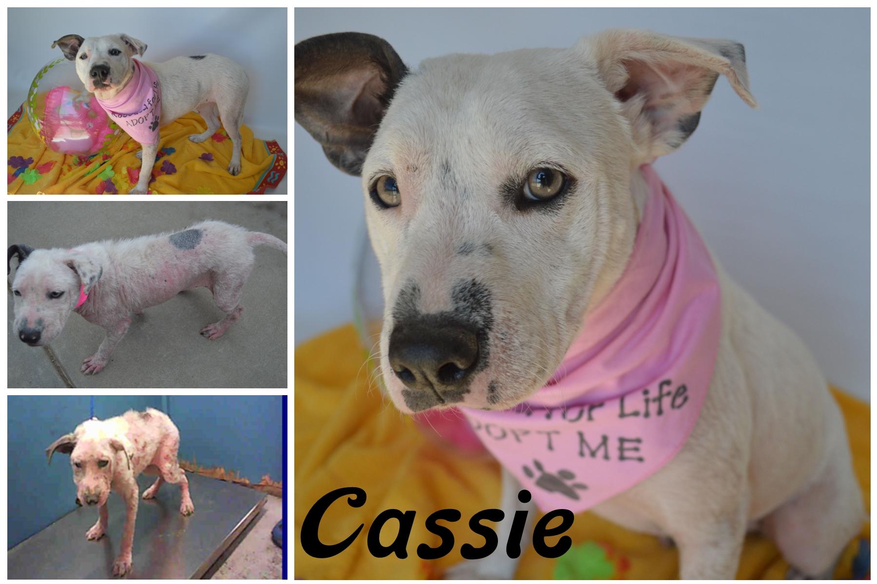 Cassie10.jpg