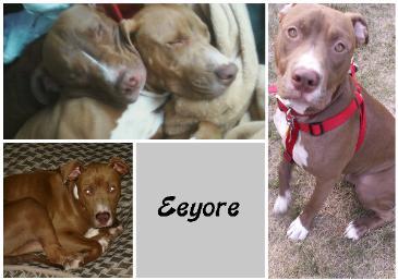 Eeyore-365x257.jpg