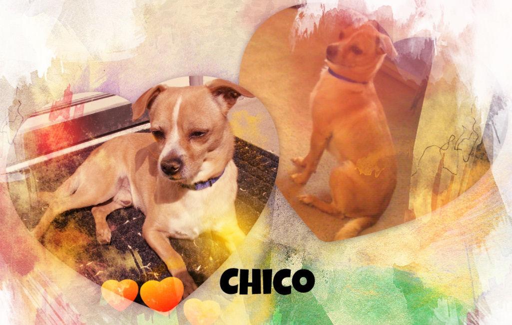 Chico.jpg