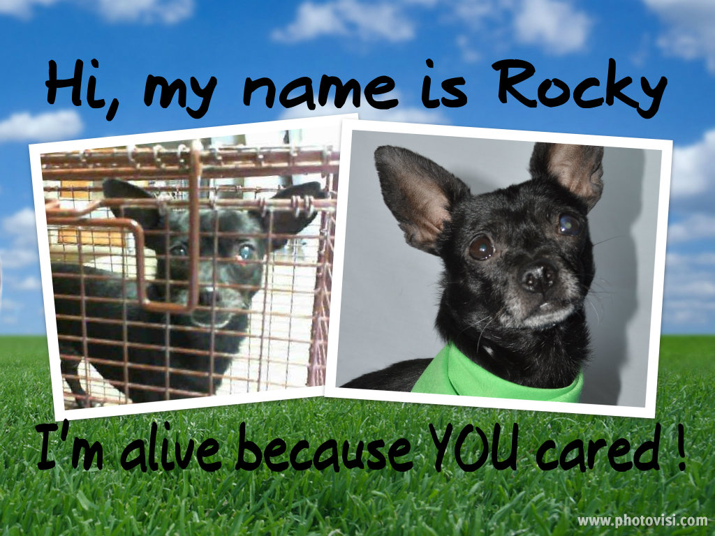 - With your help, we have saved countless of dog lives and placed them in loving hands and forever homes.