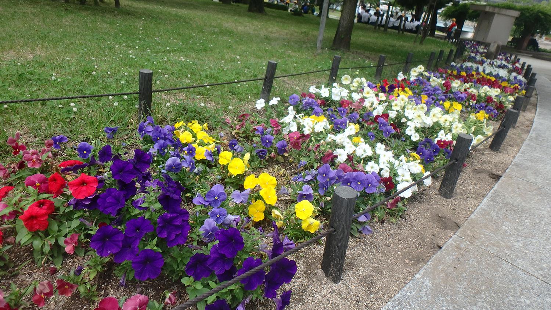 03hiroshima-flowers.jpg
