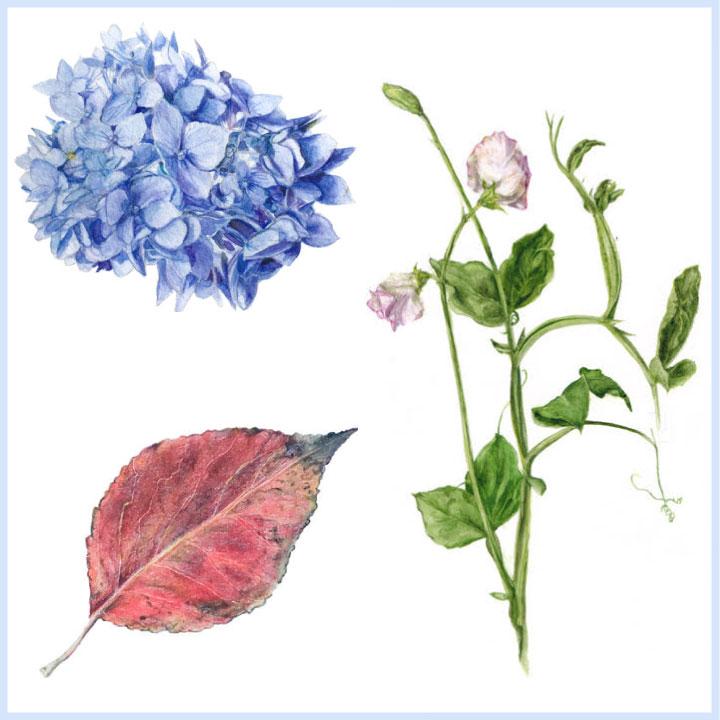 Lisa Maxwell Illustration, Prints & Cards