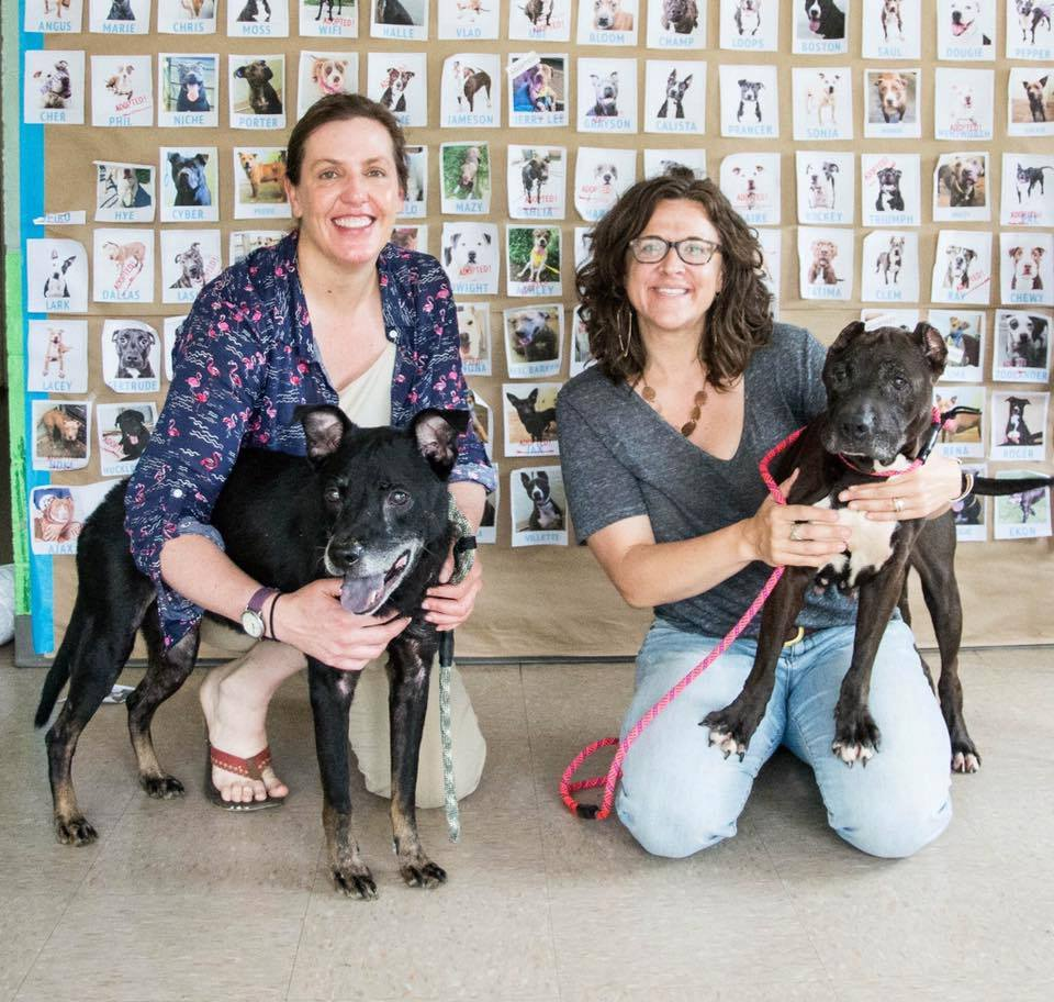 Erica, Ollie, Lisa, and Samantha at DeKalb Animal Services in 2017 after having wrapped data collected on their temporary fostering study and were getting ready to transport these pups to Muttville senior dog rescue for adoption in San Francisco, CA (photo credit: Kaitlyn Garrett)