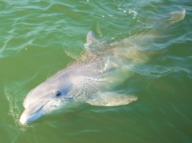Dolphin Nature Cruise -
