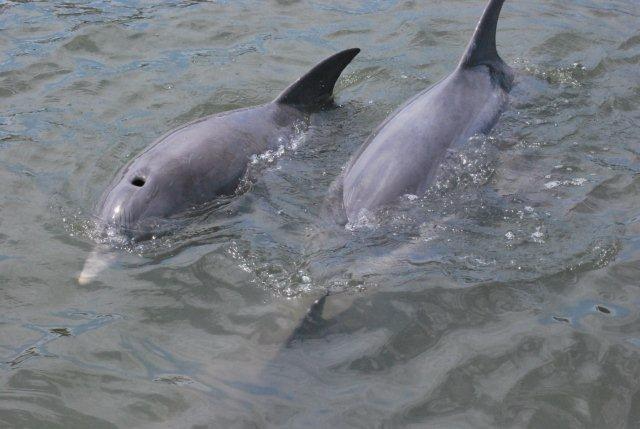 two dolphins.png