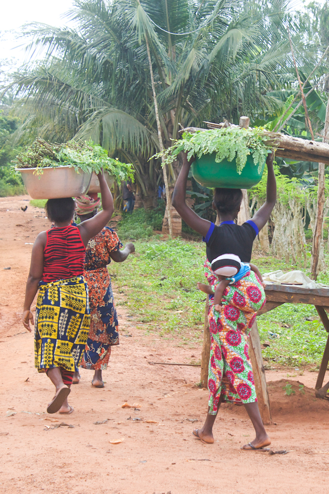 Women harvesting moringa in Togo