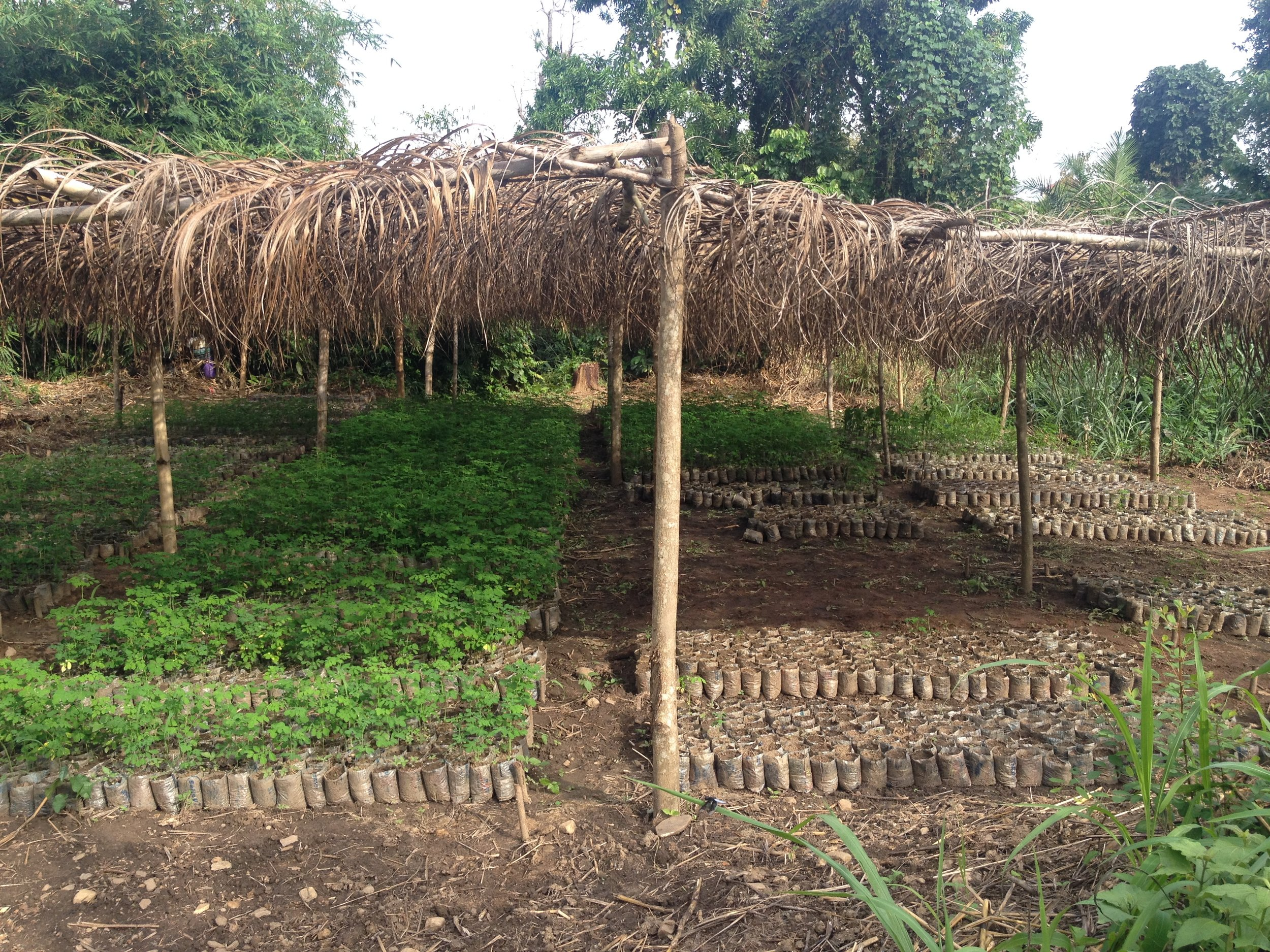 moringa nursery Togo