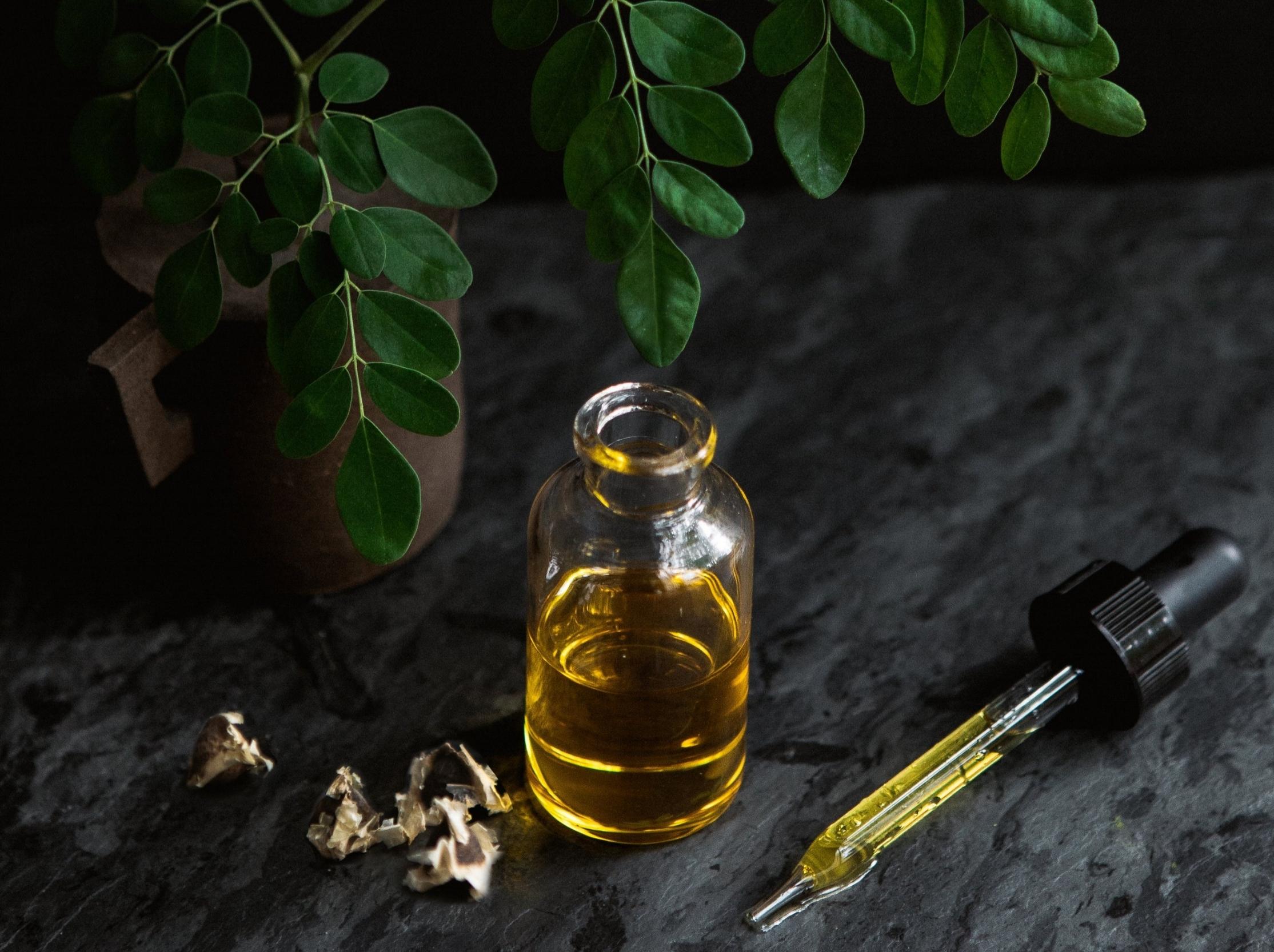 nutu moringa oil tree with moringa seeds and leaves