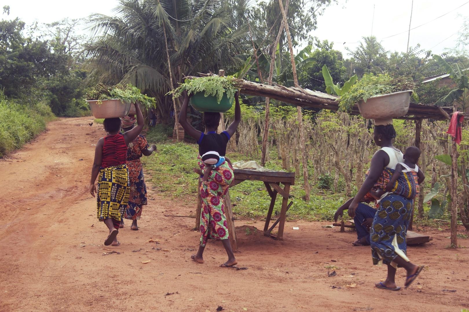 nutu the power of moringa helping africa