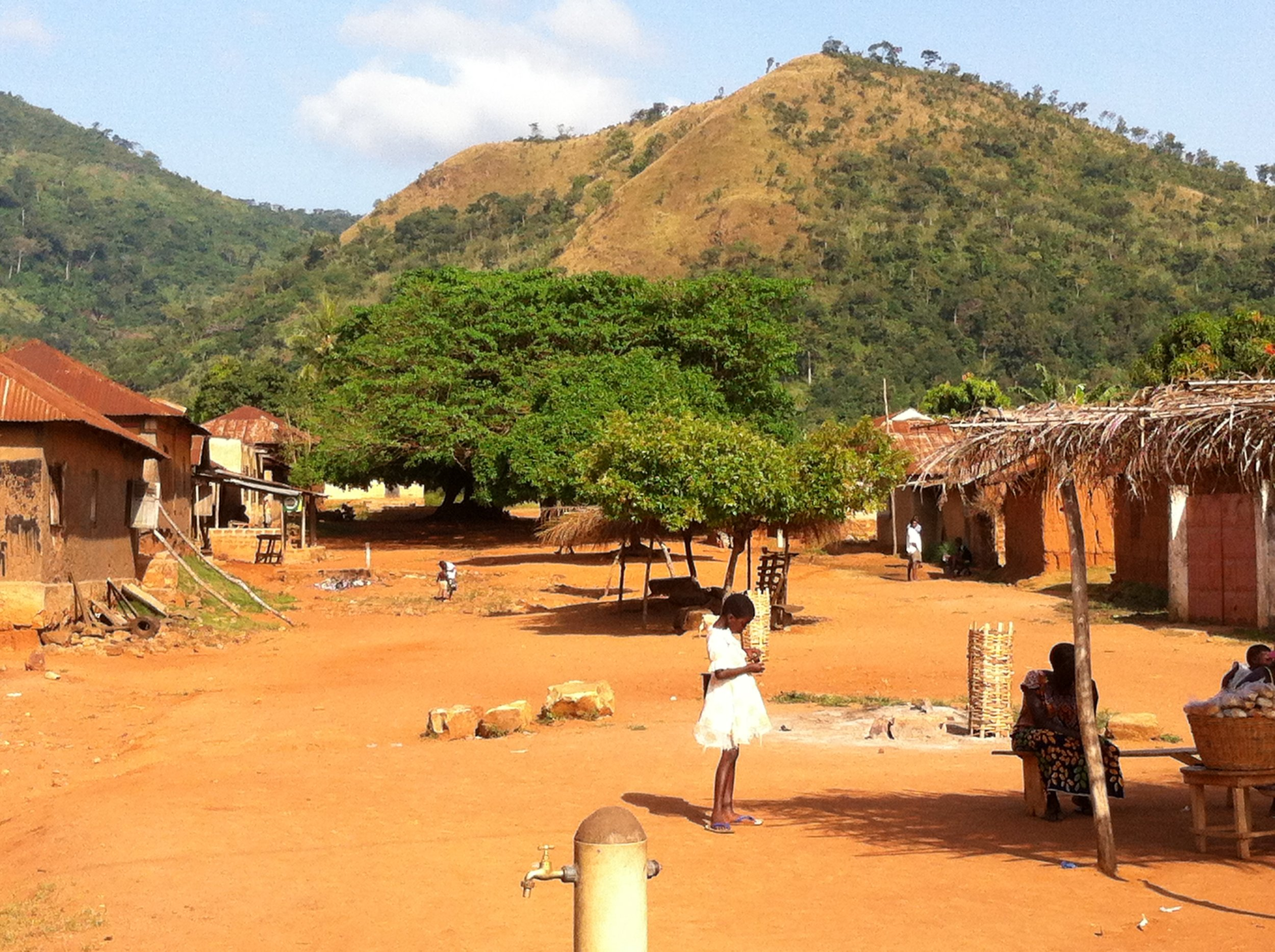 nutu origins history of moringa