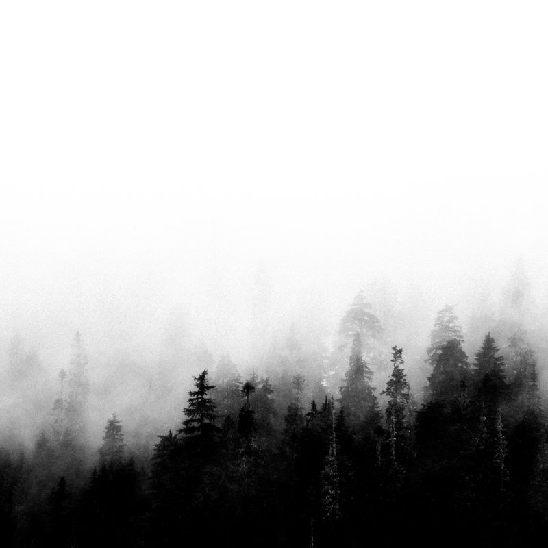 Forest ~1, May 2017