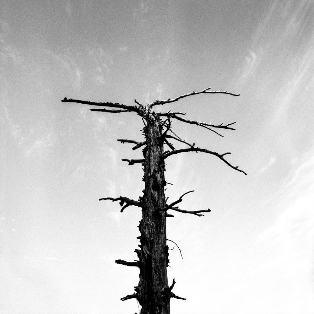 Tree, Angel's Rest, Jul 2017
