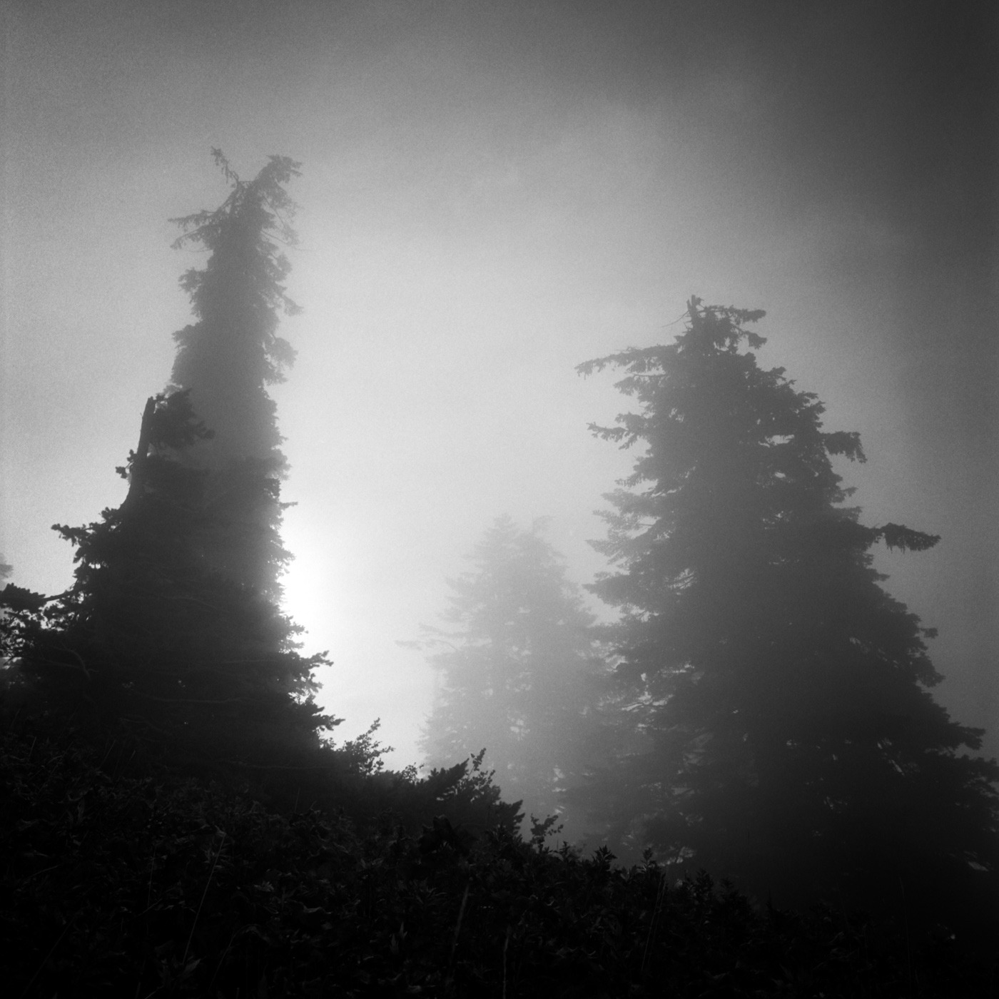 Trees and Fog, Dog Mountain, August 2017