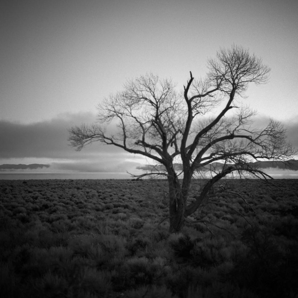 Lone Tree, Lee Vining, December 2017