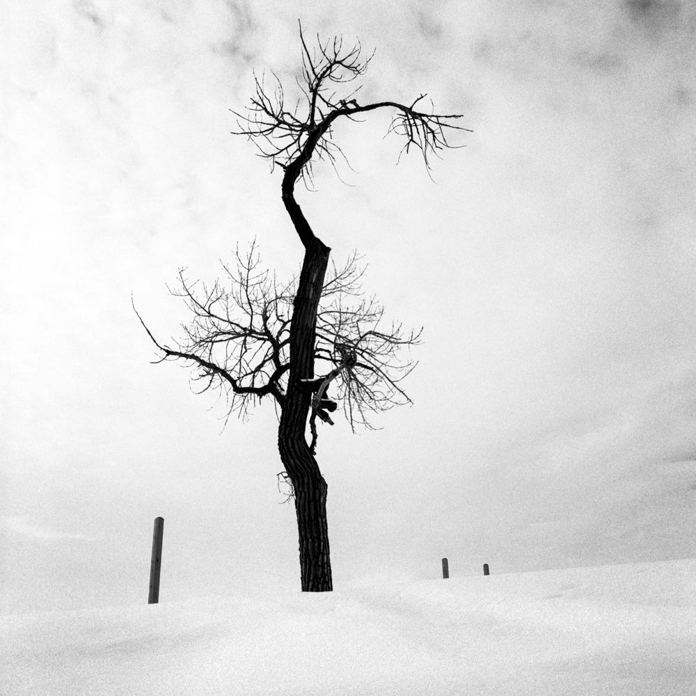 Tree and postes, Indiana Dunes, February 2018