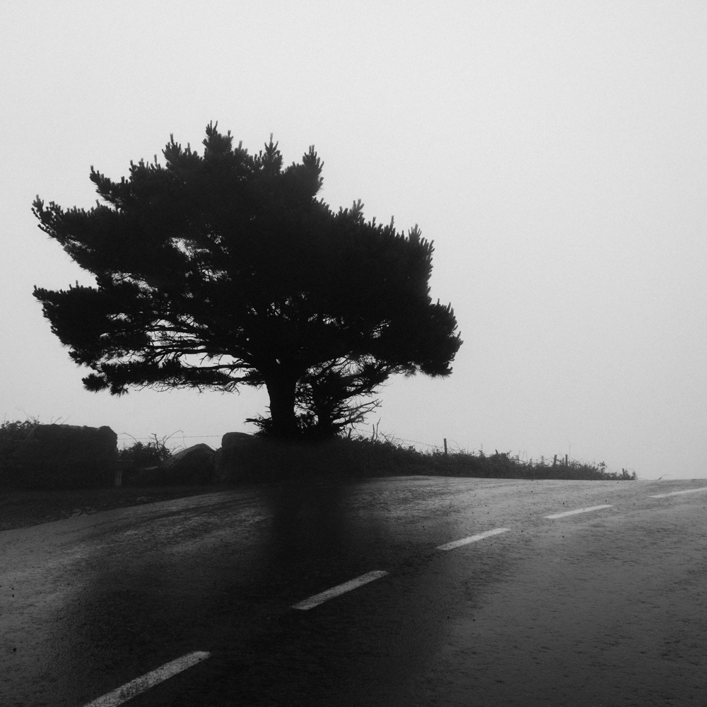 Tree on the side of the road, San Andres de Teixido, June 2018