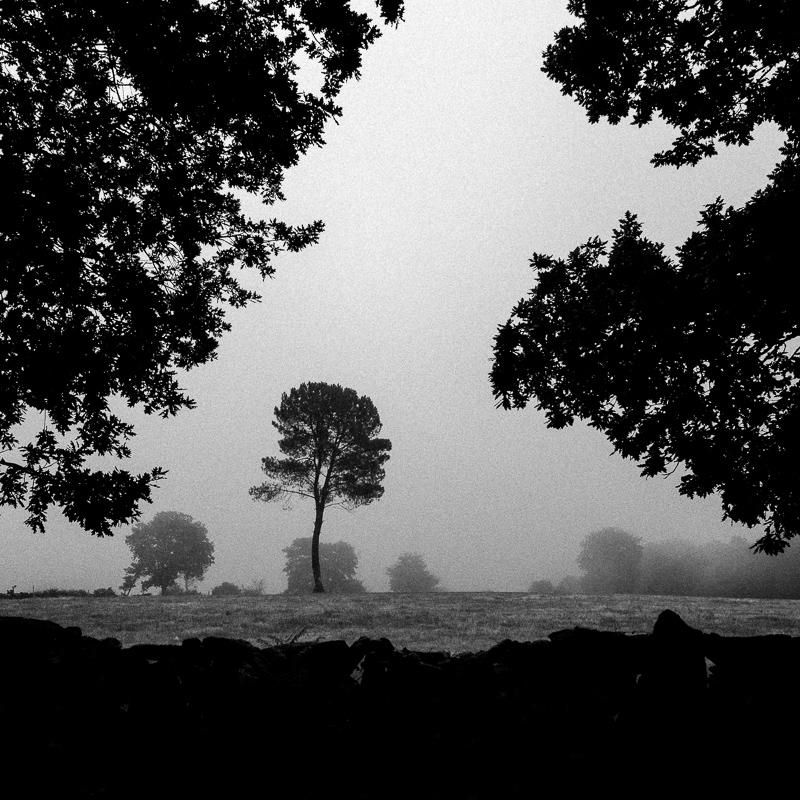 Tree, somewhere in Lugo, July 2018