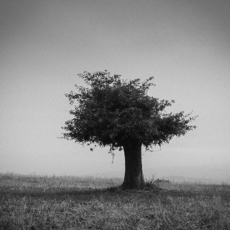 Tree, O Incio, August 2018