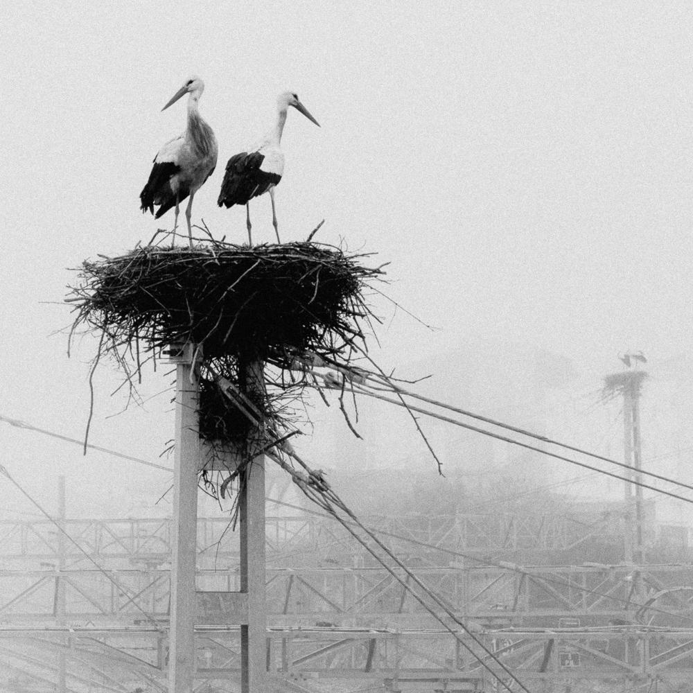 Storks, Monforte de Lemos, February 2019