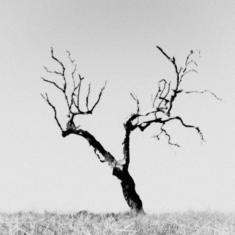 Lone tree, Alentejo, December 2018